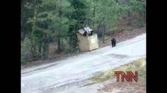 Baby Bears Recused    http://youtu.be/9EAq4ffOaRE