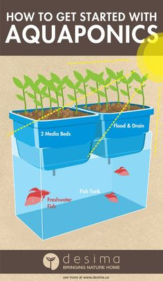 How to get started with aquaponics What is aquaponics? Aquaponics is a way of growing plants and aquatic animals together in the same system. It is the combination of the two conventional farming techniques, aquaculture and hydroponics. Aquaculture is t Aquaponics System, Hydroponic Farming, Hydroponic Growing, Aquaponics Diy, Growing Plants, Aquaponics Greenhouse, Fish Tank Aquaponics, Fish Farming, Organic Gardening