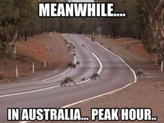 Meanwhile in Australia 23 photos Morably
