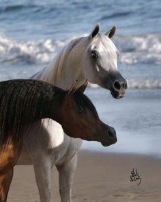 El Dorada Piannisima Stuart Vesty photo. Arabian mare