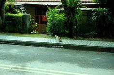 20140827【第三天:發現貓兒】 回程的路上看到一隻花貓,在人行道上休息。 這裡的貓很少,比較常看見狗,或許是因為狗多,所以貓兒都躲起來了?