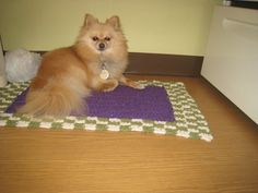 Bailey Pom  modeling a rug that his pet human crocheted for  her mom's kitchen.