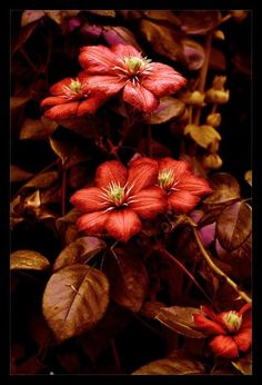 gorgeous Fall color flowers