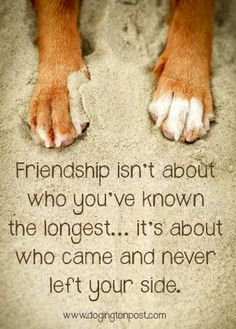 New Dogs Quotes Love Best Friends Bff Ideas Dog Quotes Love, True Quotes, Quotes To Live By, Dog Best Friend Quotes, Pet Quotes Dog, Bff Quotes, Qoutes, I Love Dogs, Puppy Love