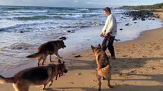 Ich LIEBE den Strand und meine Schäferhunde lieben ihn auch ♥
