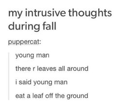 My intrusive thoughts during fall puppercat: young man there r leaves all around I said young man eat a leaf off the ground   Tumblr