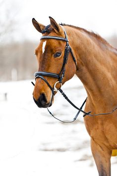 Horze Madam Bridle: cute silver heart clincher browband- comes in pony size!!