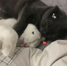 These sweet kittens will make you happy. Cats are wonderful friends. Animals And Pets, Baby Animals, Funny Animals, Cute Animals, Animals Images, I Love Cats, Cute Cats, Funny Cats, Pretty Cats