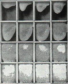 Acidental Mistérios, 01.22.12: A Galeria de Imagens Weekly: Projeto Observer