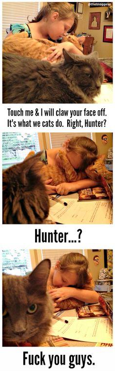 Grumpy cat vs. cuddly cat