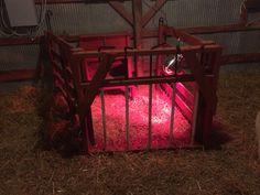 DIY, lamb creep gate & feeder that I built myself
