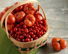 """Florida: uno studio per rendere i pomodori più """"gustosi"""" - http://www.myeffecto.com/r/1l55_pn"""