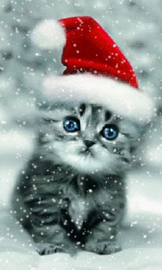 Explore and share Cats in Winter Wallpaper, free Winter cat scre.- Explore and share Cats in Winter Wallpaper, free Winter cat screensaver wallpaper screensaver Cute Kittens, Fluffy Kittens, Christmas Kitten, Christmas Animals, Winter Christmas, Merry Christmas Pictures, Winter Cat, Winter Wallpaper, Christmas Wallpaper