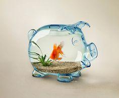 piggy swallowed a goldfish!!