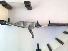 Stretched Fabric Cat Climbing Structures from CatastrophiCreations
