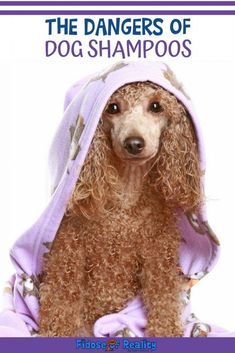 Not all dog shampoos are safe. There are ingredients in dog shampoo that can harm dogs. Discover dog health safety tips and how to determine a safe dog shampoo. All Dogs, Dogs And Puppies, Poodle Puppies, Doggies, Dog Health Tips, Pet Health, Cheap Pet Insurance, Red Poodles, Dog Cleaning