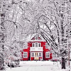 winter, snow, and red resmi
