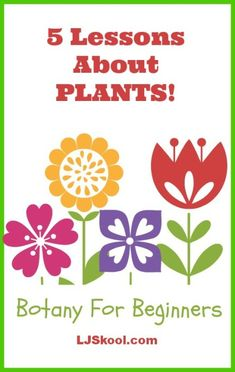 Botany for beginners in 5 lessons