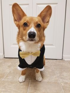 The Queens corgis — The most adorable Ring Bearer/Best Man. at...