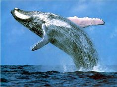 I hate whales so much!! They scare me, looking at this picture is freaking me out!