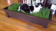 Large cat grass kit cat grass bed cat grass by DigitalDistractions