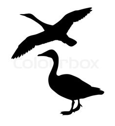 Stock vector of 'Vector silhouette goose on white background'