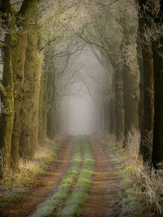 Going for a walk escape peace - Westerbroek - Groningen - The Netherlands - by Erik Bethlehem Beautiful Roads, Beautiful Places, Beautiful Pictures, Tree Tunnel, Portal, Foggy Morning, Natural Phenomena, Ciel, Pathways