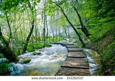 Path To Jungle kuvitusvalokuvat   Shutterstock