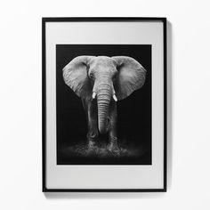 Tavla Elefant, 50x70 cm, svart
