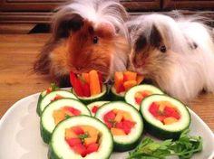 DIY Guinea Pig Sushi - petdiys.com #AquariumTips