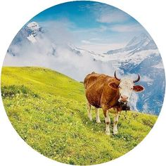 In all honesty.... I envy that cow __ I mean who wouldn't love to be breathing fresh air have fresh organic food all around and even take naps anytime of the day. and what about the views!!!! The darn precious views!!!!  __  @andrew_mayovskyy __ #cow #mountains #dream #life #StartWithin #motivation #goals #cravings
