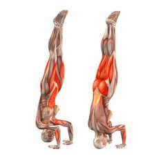 Crane pose with both legs up - Sirsasana - Yoga Poses | YOGA.com
