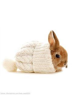 bunny rabbit / rosanna devon