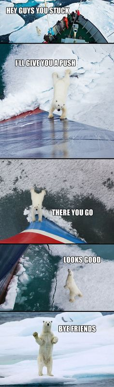 Good guy polar bear. aaw
