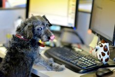 Every Day is Work Like A Dog Day at Petplan!