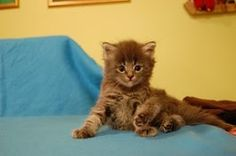Feline <3