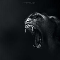 G-Animals MAMMALS | David Drbal Photography