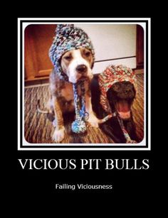 This reminds me exactly of Hemi and Atlas. #ViciousFail #PitBull
