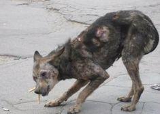 Wie dieser Hund aufgefunden wurde, ist einfach nur traurig. Doch das Ende...Wow!