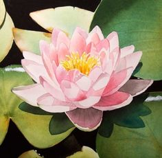 """""""Waterlily & Friends"""" - by Jacqueline Gnott.... ~Watercolor"""
