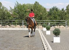 """""""A Lateral Movement Workbook: Shoulder-In"""" Volker Brommann shows you how to make your horse stronger and more supple with shoulder-in, """"the mother exercise of all lateral work."""""""