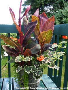 """One of my planters this year, with the """"thriller, filler, & spiller"""" method!"""