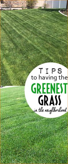 Tips and Tricks to Having the Greenest Grass in the Neighborhood.  Helpful gardening tips to a healthy, well manicured yard.  When to water your lawn, how to get rid of weeds and the best way to fertilize your grass.