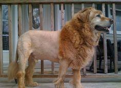 peinados feos perros9