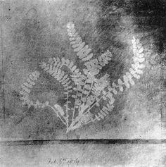 William Henry Fox Talbot (1800-1877 British) • Photogram Leaves 1836