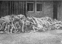 Bodies that were piled, after they were murdered in Dachau. How can people see these photos and deny the holocaust happened? Smh