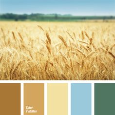 This is a classic wedding color combination. Brown, yellow, blue, beige and gray – these are bright and festive colors. They will be a perfect backdrop for a wedding celebration, making the event stylish and bright. After all, this palette was inspired by the blue sky and golden wheat.