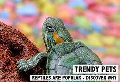 La nouvelle tendance chez les animaux de compagnie - Les reptiles. Découvrez plus sur les Top 3: la tortue, le serpent et le gecko sur www.rosportlife.com