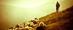 Riflessioni sugli Anziani della Chiesa  Il pastore va davanti al gregge, è l'esempio del gregge.  Alcune considerazioni sugli anziani e sul loro ufficio.