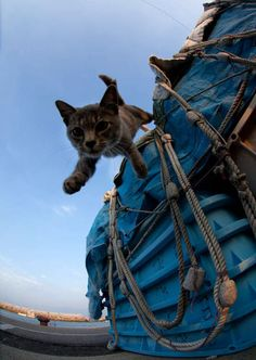 cute island cat jumps off a fishing boat on fukuoka shore japan. Cats are treated with love and respect by the fishermen in Fukuoka Japan.